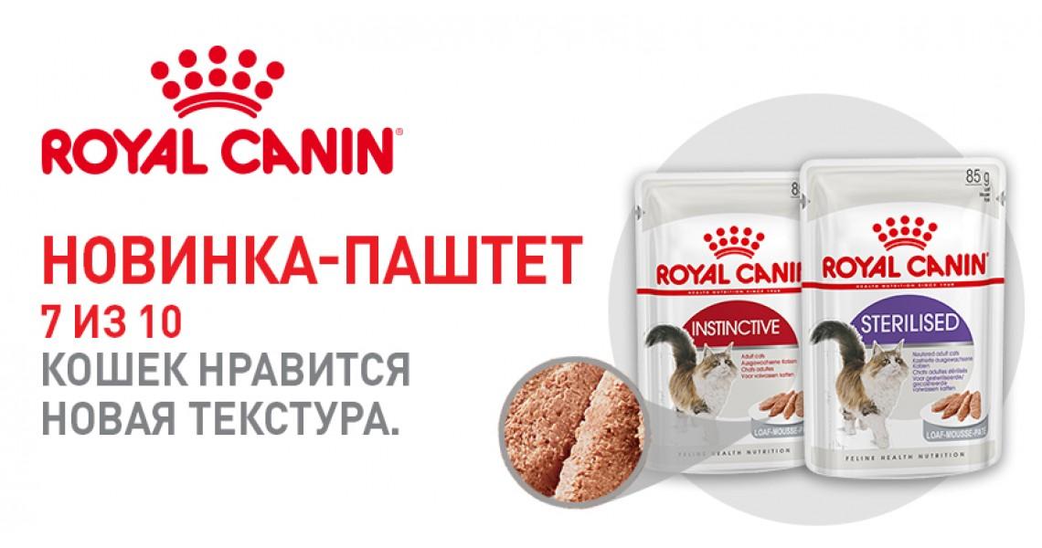 royal-canin-pashtet