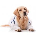 Диеты для собак